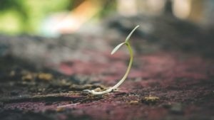 New growth in recovery, drug rehab, new sprout in the dirt, drug rehab, Foundations Wellness Center