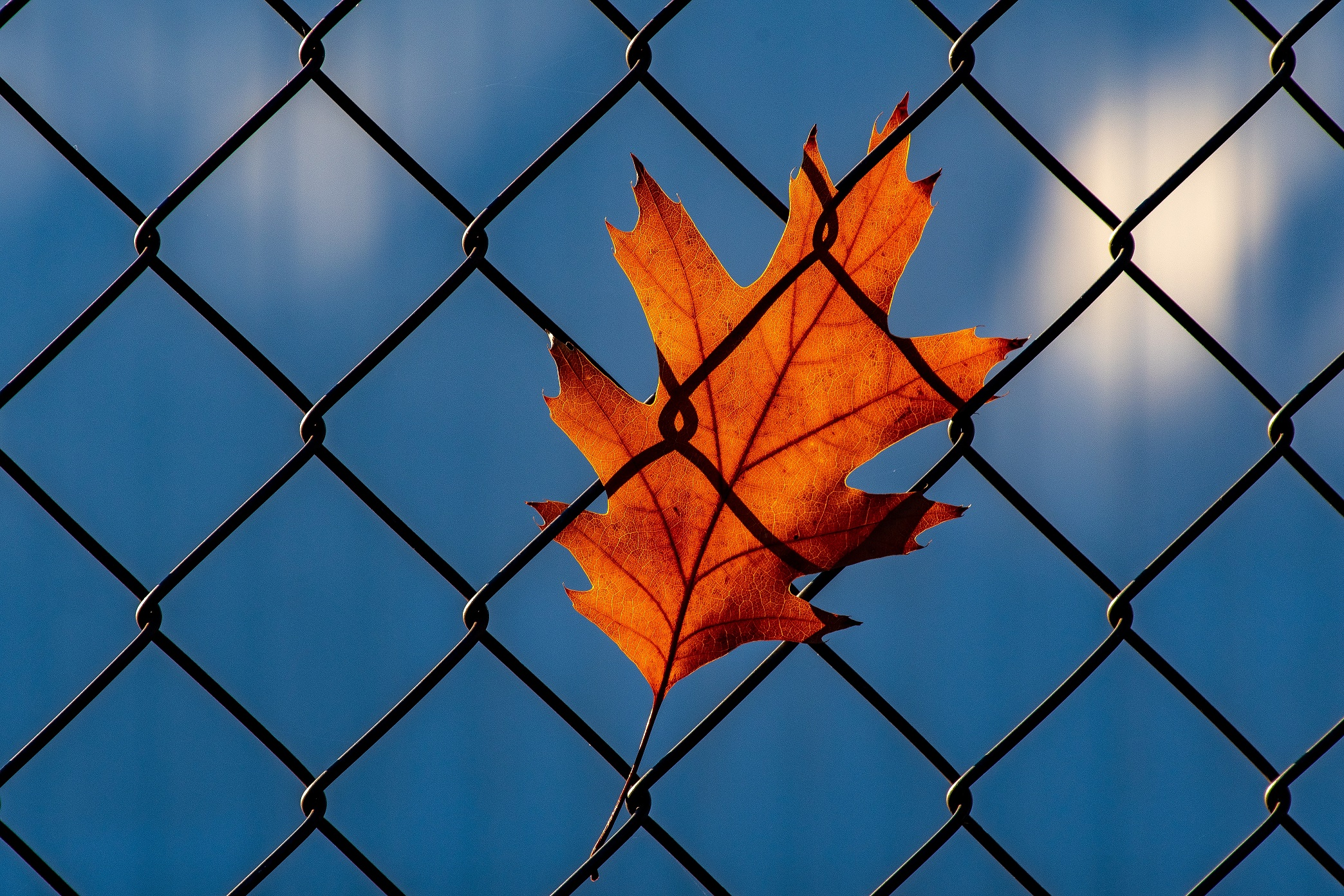 Leaf stuck in a fence, Incarceration vs Rehabilitation, Foundations Wellness Center, drug rehab