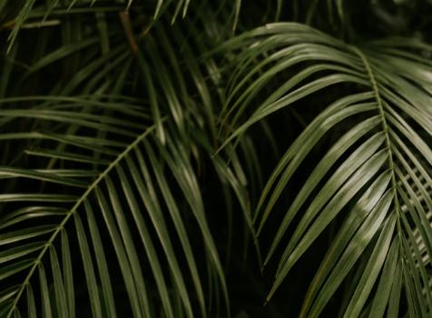 Closeup of Palm Fronds, Florida intensive outpatient IOP program, Foundations Wellness Center