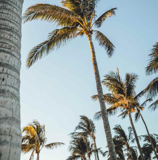 palm trees and blue sky, short term rehab, Foundations Wellness Center
