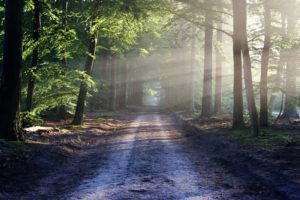 Dirt Road through the Forest, What is Dual Diagnosis and How is it Treated, Foundations Wellness Center