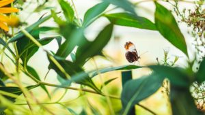 Butterfly Landing on a Leaf, What is Holistic Addiction Therapy, Foundations Wellness Center