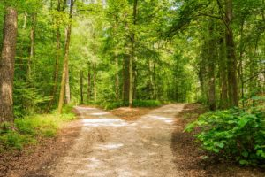 Diverging paths through the woods, Tiger King and meth addiction, Foundations Wellness