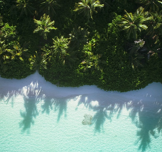 Palm trees dotting a beach, medication assisted treatment Florida, Foundations Wellness Center