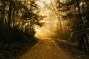 Path through the forest, is weed addictive, Foundations Wellness Center