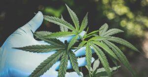 Is Weed Addictive?