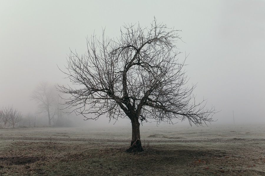 Tree in winter landscape, fentanyl drives record overdose rate, COVID is a contributor