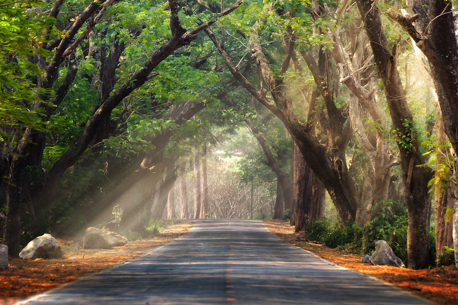 Canopy-of-Trees-with-Sunlight-Poking-Through-Over-a-Two-Lane-Road-Overdose-After-Relapse-Foundations-Wellness-Center